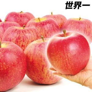 【限定5名】1玉500g超!!世界一大きなリンゴ(5kg1箱) 片付け110番プレゼント!