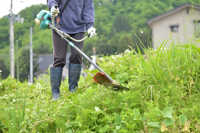 守山市で草刈りに最適な年3回の時期~楽に草刈りを終えるコツまで徹底解説