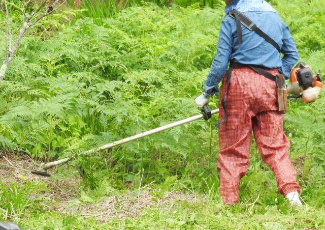 大津市で草刈りにかかる料金相場は?追加料金や業者選びのコツまで解説